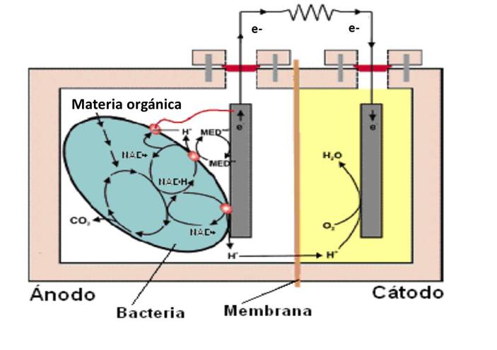 Pilas-biológicas_interior